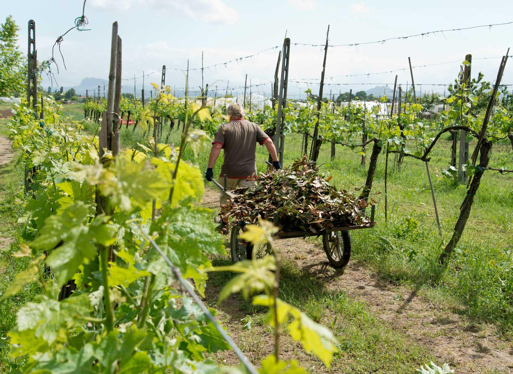 Agricoltura-Contadini-Orticolti_GAL4563