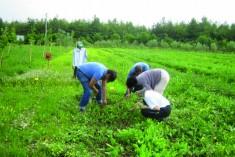 Giovani in agricoltura, nuovi aiuti dalla Regione Emilia Romagna