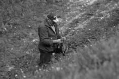 Alla scoperta dell'erba di campo