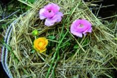 Giardini d'inverno: ecco come proteggerli