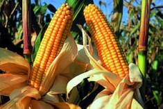 È giusto produrre  beni alimentari per farne energia?