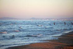 Il mar Adriatico gode di buona salute