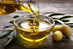 Olio d'oliva riminese: poco ma buono