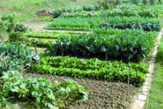 Nei campi riminesi si… coltiva aria nuova
