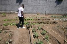 Fra Microcredito e Orto sociale