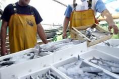 Caro gasolio, i pescatori tornano a gettare le reti