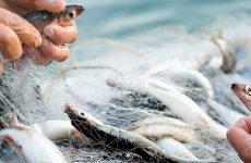 Rimini e la pesca. Remi in barca?
