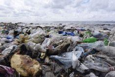 Rimini plastic free