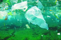 Plastica  e ambiente, siamo ancora  in tempo?
