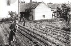 Un secolo di agricoltura 'alla romagnola'