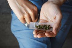 La Cannabis così light non lo è mai