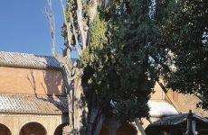 Patriarchi con le radici, il censimento degli alberi secolari