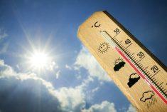 Previsioni: caldo fino a martedì prossimo. Poi si attenua